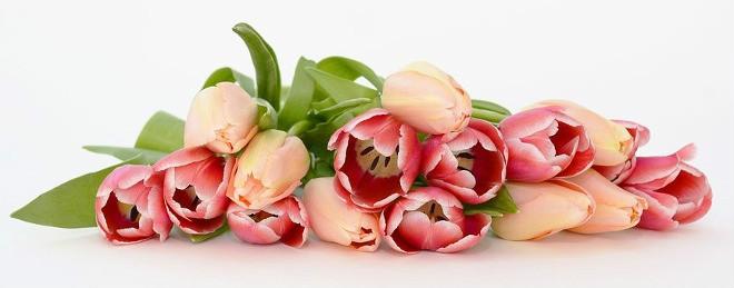 Tulipny
